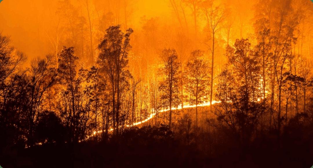 fuego en el bosque